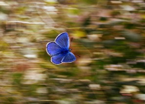 butterfly-2837589_1280
