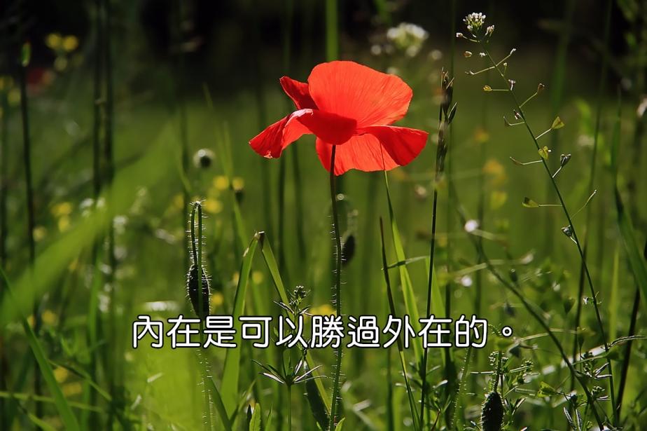 poppy-3137588_1280-2